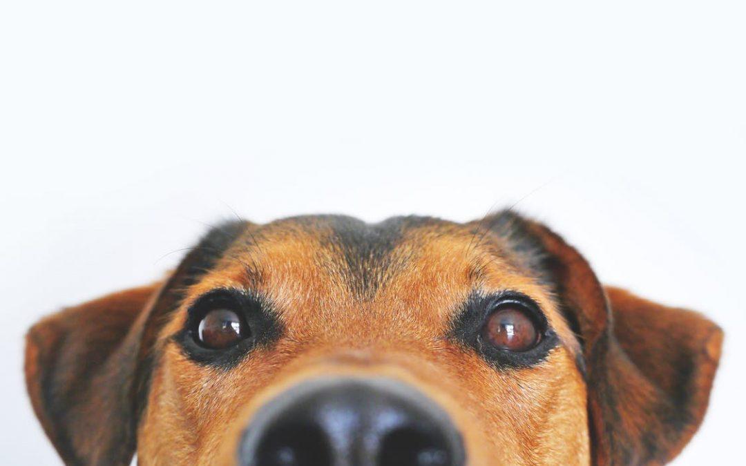 Medicines for veterinary use